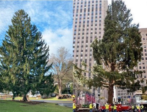 Was the Rockefeller Christmas Tree Destroyed in Transit?